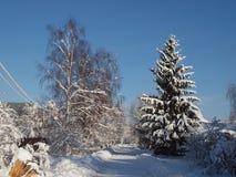 Дорога зимы освободилась снега среди деревьев на ясный солнечный день Стоковое Изображение