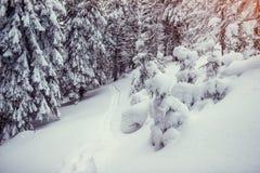 Дорога зимы Прикарпатский, Украина, Европа Прикарпатско, Украин, Европа Стоковое Изображение