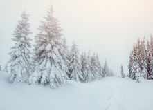 Дорога зимы Стоковая Фотография