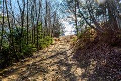 Дорога или путь горы через лес к верхней части стоковое фото