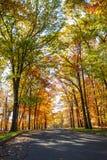 Дорога листвы осени Стоковое Изображение RF
