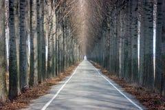 Дорога и высокие деревья стоковая фотография