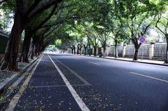 Дорога и деревья стоковые фотографии rf