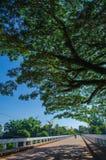 Дорога и деревья Стоковая Фотография RF