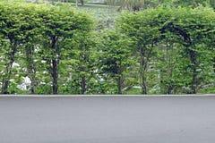 Дорога и деревья Стоковое Изображение