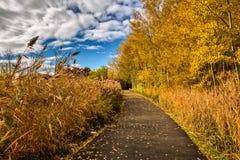 Дорога и листва осени вокруг ее Стоковые Фото