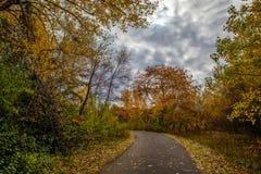Дорога и листва осени вокруг ее Стоковые Изображения RF