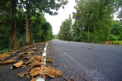 Дорога и листья Стоковое Изображение