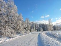 Дорога и красивые деревья зимы, Литва Стоковое Изображение RF