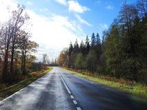 Дорога и красочные деревья осени, Литва Стоковое Изображение RF