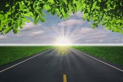 Дорога и листья зеленого цвета Стоковое Фото