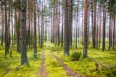 Дорога и мох леса стоковое фото rf