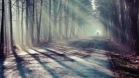 Дорога и солнечные лучи в сильном тумане в лесе, Польше акции видеоматериалы