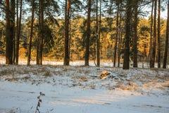 Дорога и солнце леса зимы Стоковая Фотография RF