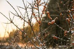Дорога и солнце леса зимы Стоковые Изображения