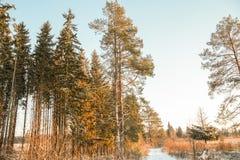 Дорога и солнце леса зимы Стоковое Фото