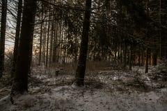 Дорога и солнце леса зимы Стоковое Изображение RF