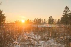 Дорога и солнце леса зимы Стоковое фото RF