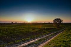 Дорога и солнце Стоковые Фотографии RF