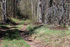 Дорога и anthills в лесе стоковое изображение rf