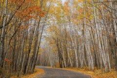 Дорога клена замотки, осень стоковое фото rf