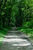 Дорога красивого лиственного леса весны пакостная среди дубов Стоковая Фотография RF