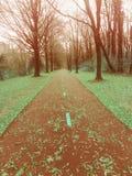 Дорога красного ковра Стоковое фото RF