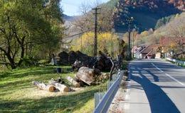 Дорога красочной осени сельская Стоковое Изображение