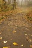 дорога кривого Стоковое Изображение