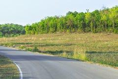 Дорога кривой асфальта стоковые изображения rf