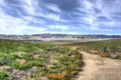 Дорога к больше цветков стоковое фото
