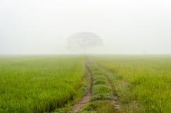 Дорога к большому дереву в тумане Стоковое Фото