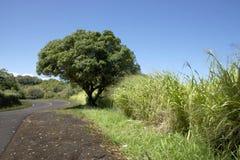 Дорога к Гане, Мауи Стоковые Изображения RF