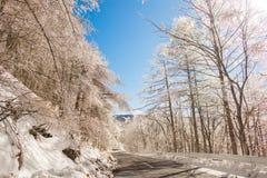 Дорога к горе в зиме (Япония) Стоковое Изображение