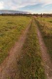 Дорога к древесине на осени, вкосую полю Стоковые Фото