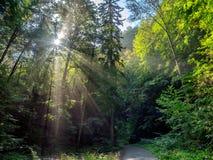 Дорога к пещерам Punkva около Брна в чехии стоковые фото