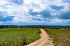 Дорога к плотному зеленому лесу под голубым небом Стоковое Изображение RF