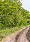Дорога к полю вдоль цветя акаций стоковое фото rf