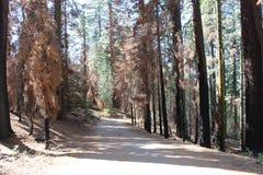 Дорога к славе Стоковое Изображение RF
