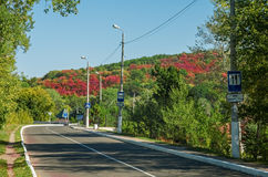Дорога к Svatogorsk Стоковое Фото