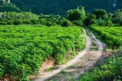 Дорога к Topioca Стоковые Фото
