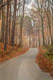 Дорога леса в лучах восходящего солнца Стоковое Изображение