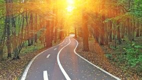 Дорога леса идет в расстояние против фона s Стоковое Фото