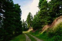 Дорога леса на Pertouli, Trikala, Thessaly, Греции стоковое фото