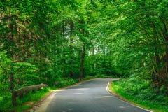 Дорога леса поворачивая справедливо Стоковое Изображение RF
