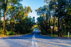 Дорога леса стоковое фото rf
