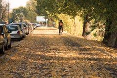 Дорога, листья, велосипед, осень Стоковые Изображения