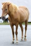 дорога лошади Стоковое Фото