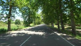 Дорога между деревьями явора в деревне Chaladidi, Georgia акции видеоматериалы