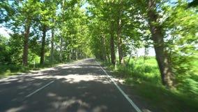 Дорога между деревьями явора в деревне Chaladidi, Georgia видеоматериал